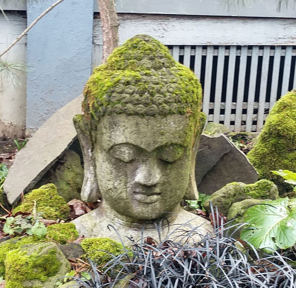 Meditate with the Buddha in the Garden